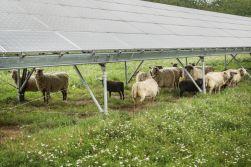 Česko má v obnovitelných zdrojích na víc, spočítali experti z Univerzity Karlovy. Rozvoj zelené energetiky přinese snížení škod na lidském zdraví a krajině až o 6,4 mld. korun k roku 2030